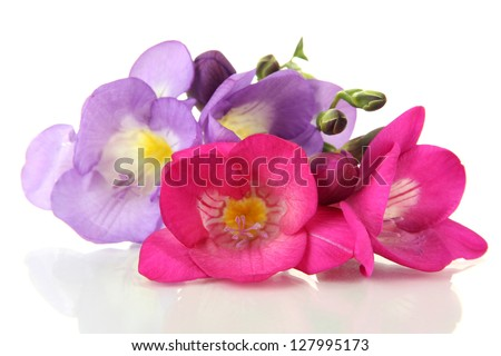 Bouquet of freesias flower, isolated on white - stock photo