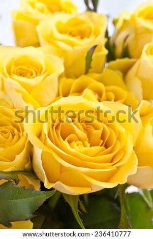 Bouquet of fresh, fully blossomed yellow roses - stock photo