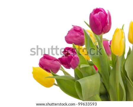 bouquet of fresh tulips isolated on white background - stock photo