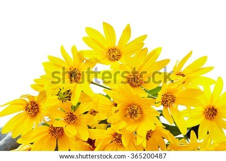 bouquet of fresh yellow flowers on white  background - stock photo