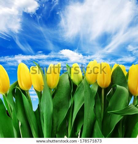bouquet of fresh yellow tulips in vase - stock photo