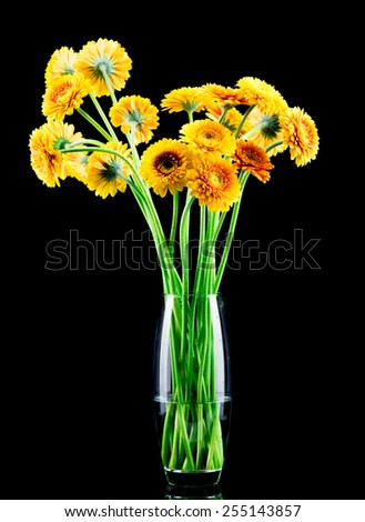 Bouquet of gerber flowers in the vase on black background - stock photo