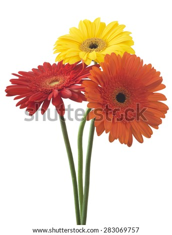 bouquet of gerberas on a white background - stock photo