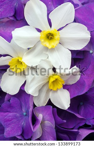 bouquet of hydrangeas and daffodils - stock photo