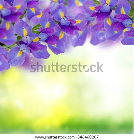 bouquet of irises on green bokeh background - stock photo