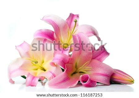 bouquet of large pink lilies with water drops isolated on white background - stock photo