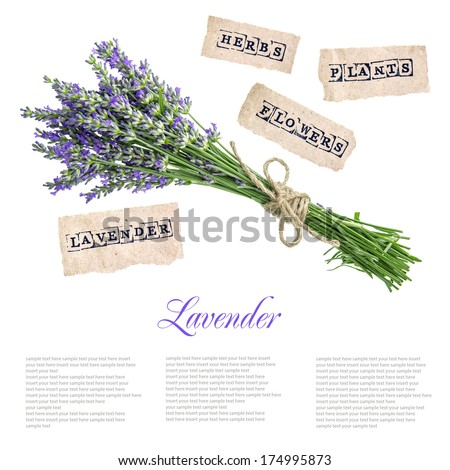 bouquet of lavender flowers isolated on white background. concept with sample text - stock photo