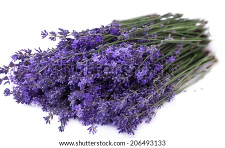 Bouquet of lavender isolated on white - stock photo