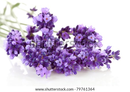 Bouquet of lavender over white background - stock photo