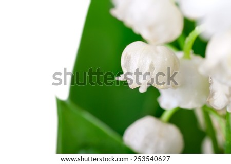bouquet of lilies of the valley isolated - stock photo