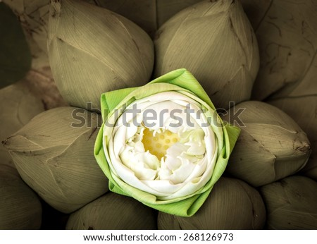 Bouquet of Lotus flowers worship to the Buddha , in Thailand, Art  picture style - stock photo