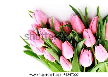 bouquet of lovely pink tulips on white background - flowers - stock photo