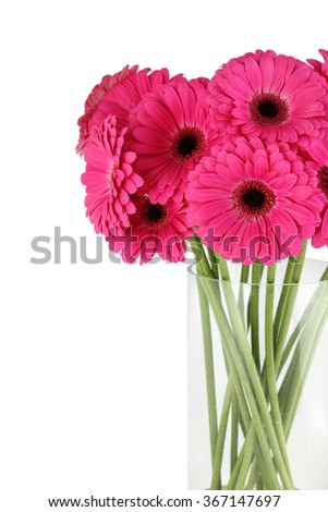 Bouquet of magenta gerbera in a glass vase. Isolated - stock photo