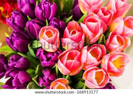 Bouquet of multicolor tulips - stock photo