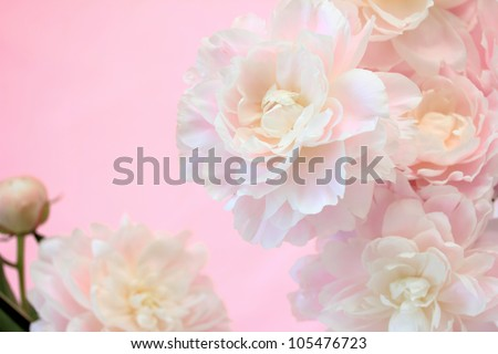 Bouquet of pastel pink peony - stock photo