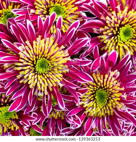 Bouquet of pink  gerbers. Floral pattern. - stock photo