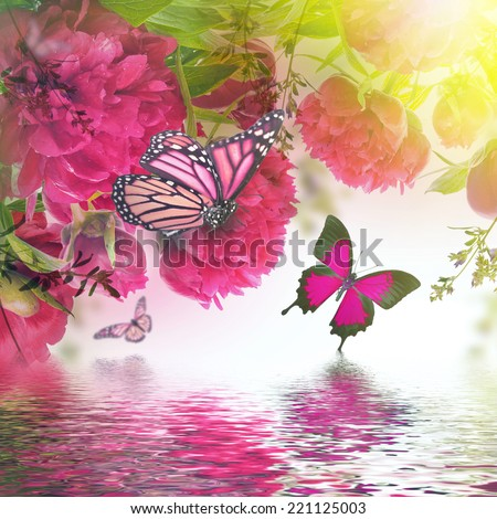 Bouquet of pink peonies and butterfly, floral background - stock photo