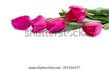 Bouquet of pink tulips on white background with space for text - stock photo