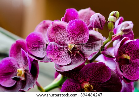 Bouquet of purple orchids.(Vanda),Clo sup focus,Selective focus - stock photo