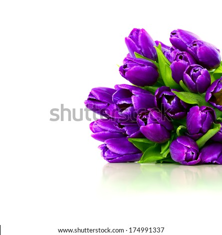 Bouquet of purple tulips on a white background, isolated with copy space. Greeting card. - stock photo