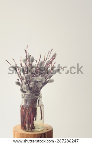 Bouquet of pussy willow twigs in glass jar on white background - stock photo