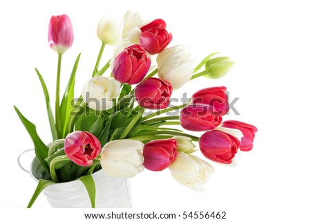 Bouquet of red and white tulips in metal bucket - stock photo