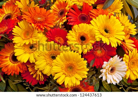 Bouquet of red and yellow gerberas. Abstract background. - stock photo