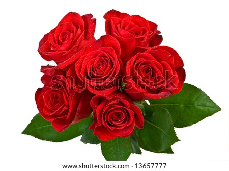 bouquet of red roses on white - stock photo