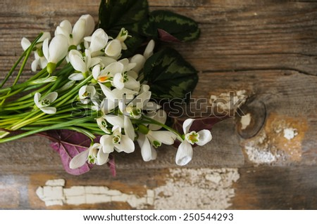 Bouquet of the first spring flowers - snowdrops, on the wooden background - stock photo