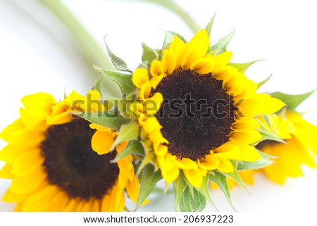 bouquet of three sunflowers isolated on white - stock photo