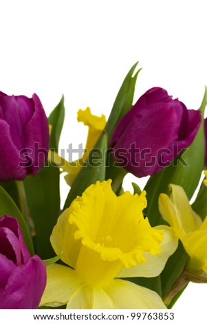 bouquet of tulips and daffodils  isolated on white background close up - stock photo