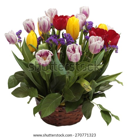 Bouquet Of Tulips Isolated On White Background. - stock photo