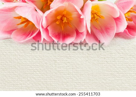 bouquet of tulips on a white background for advertising - stock photo