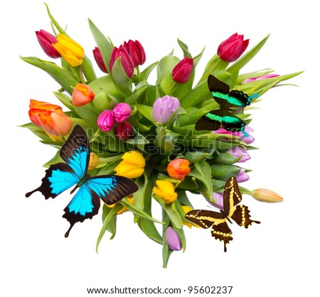 Bouquet of tulips with butterflies, isolated on white background - stock photo