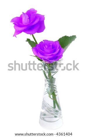 Bouquet of violet roses in a vase over white - stock photo