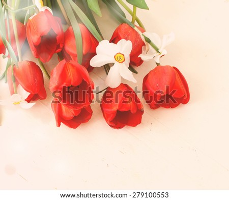bouquet of white daffodils and red tulips on a white background. Spring flowers lie on a white wooden board closeup toned photo selective focus - stock photo