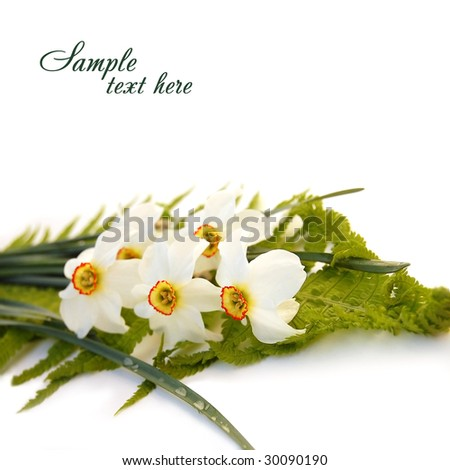Bouquet of white Narcissus - stock photo