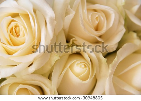 Bouquet of white roses for wedding. - stock photo