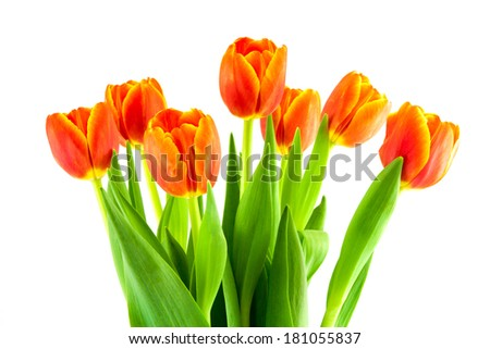 bouquet of yellow and orange tulips on a white background - stock photo