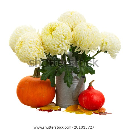bouquet of yellow mums in watering can with pumpkins isolated on white background - stock photo