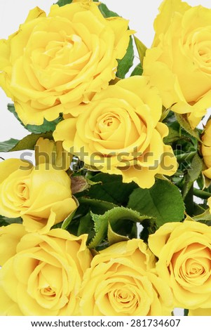 Bouquet of yellow roses. Flowers for the woman. - stock photo