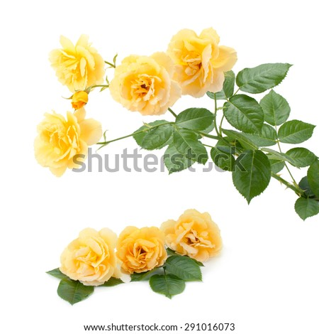 Bouquet of yellow roses isolated on white background - stock photo