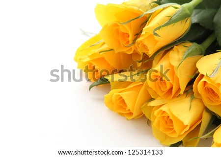 Bouquet of yellow roses on white background - stock photo
