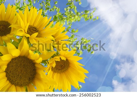 Bouquet of yellow sunflowers in the sunlight on nature background - stock photo