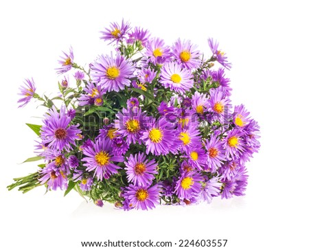 Bouquet Purple autumn flowers isolated on white background - stock photo