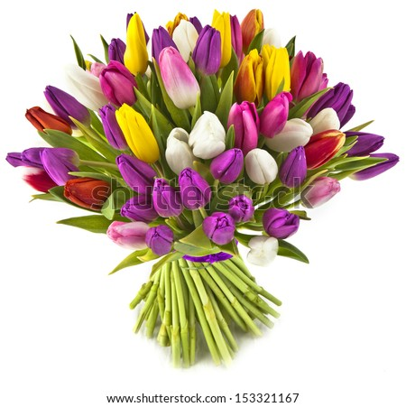 bouquet tulips on white background - stock photo