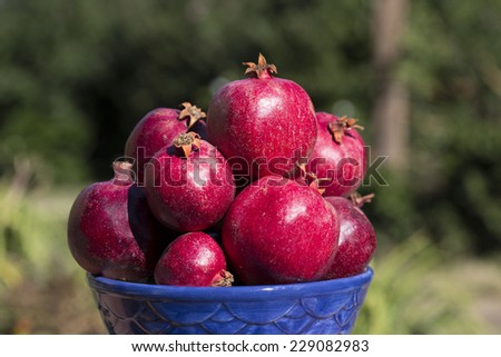 bowl full of pomegranates with blurred outdoor background, close-up - stock photo