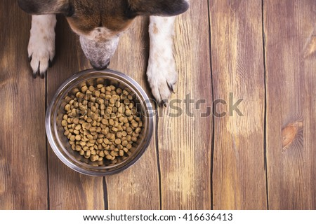 Bowl of dry kibble dog food and dog's paws and neb over grunge wooden floor - stock photo