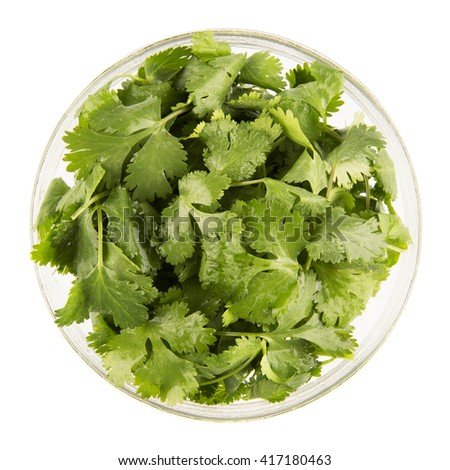 Bowl of fresh cilantro isolated on white and viewed from directly above. - stock photo