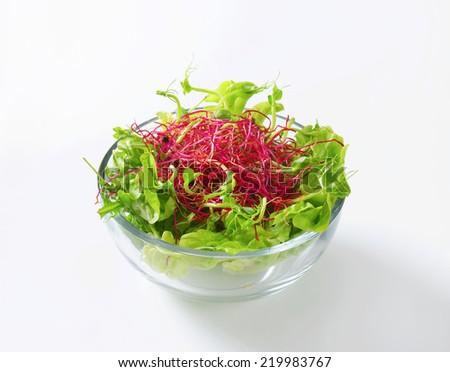 Bowl of mixed green salad - stock photo